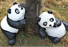 千只熊猫空降合肥欢乐岛,4月1日滚滚来袭!